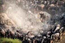 Ready for crossing, Tanzania